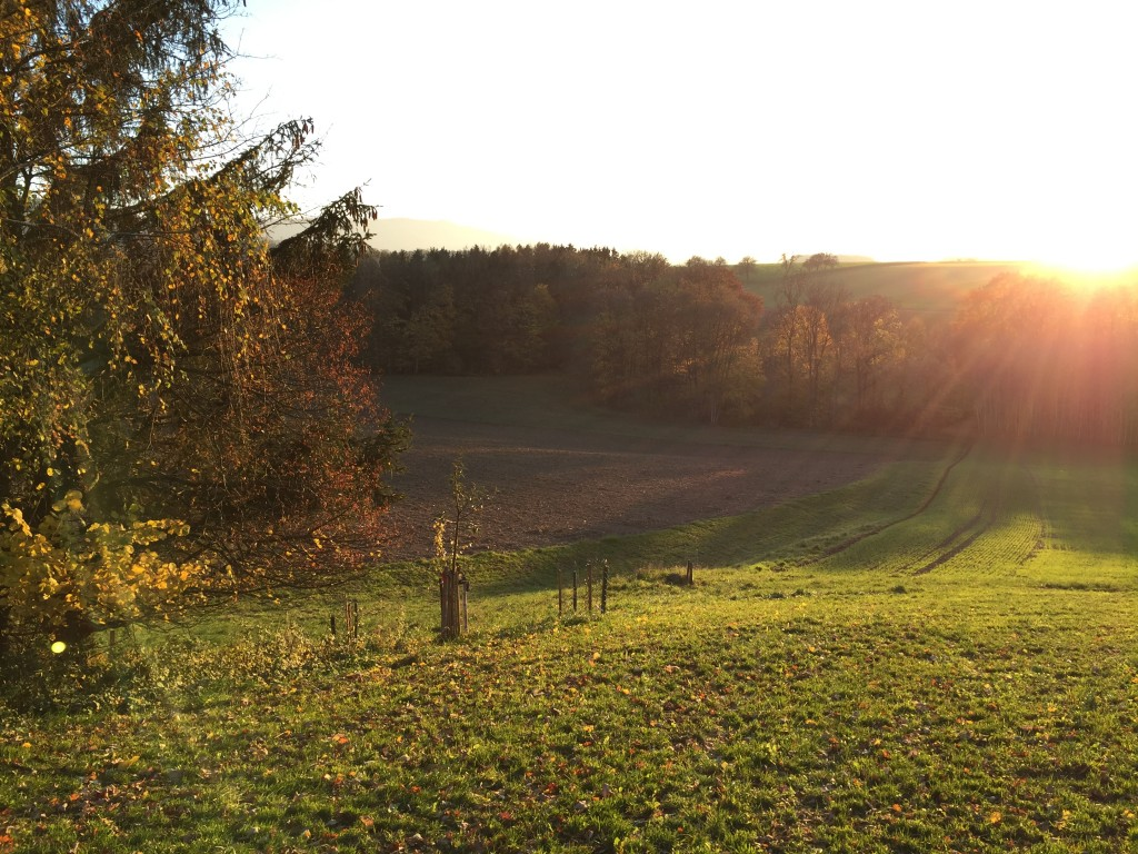 goodblog: Kraueterwissen - herbstliche Hecken