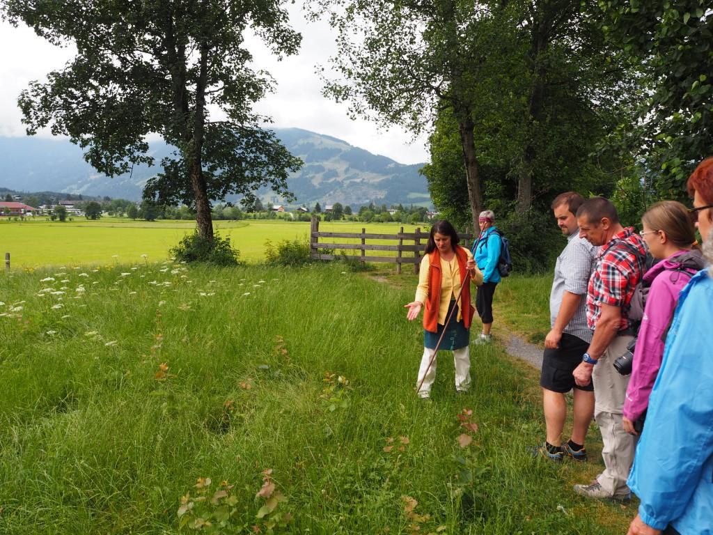Kräuterwissen: Kräuterwanderung