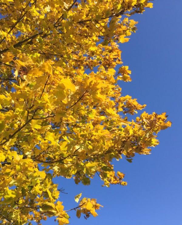 goodblog: Realität im Internet - Herbstbaum