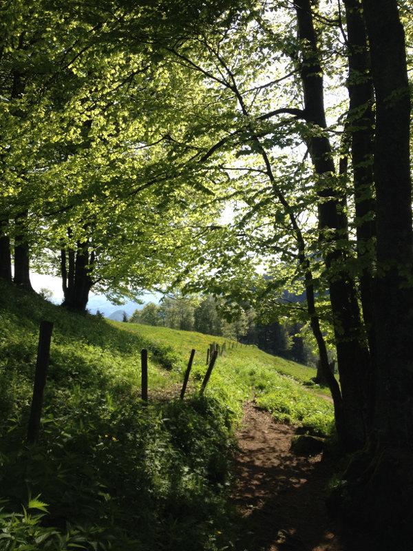 goodblog - Mein Hausberg: Der Schoberstein - Weg