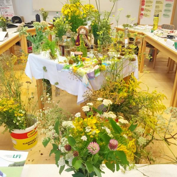 goodblog: Artikel Biomagazin - Kräuterpädagogik