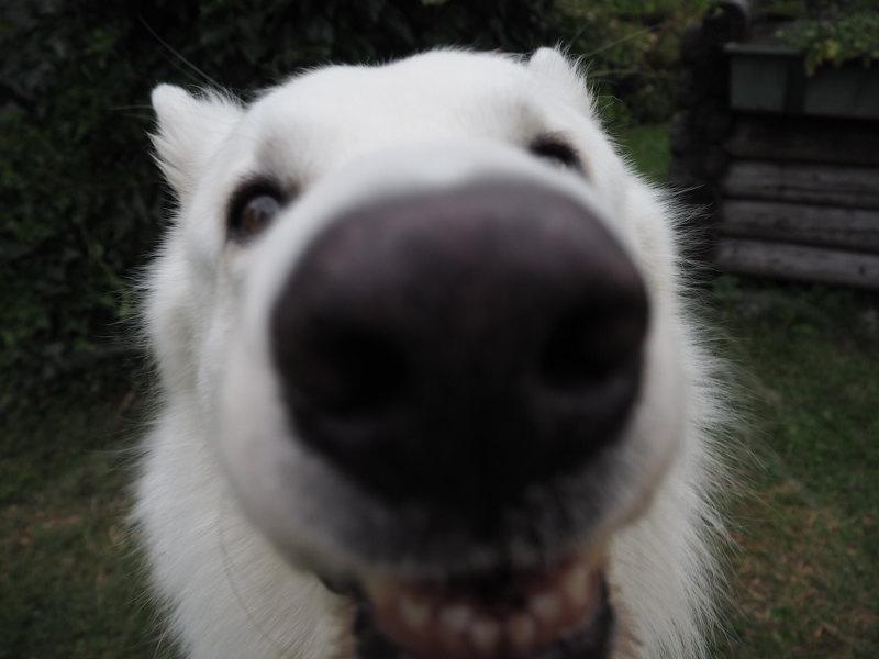 goodblog Liebster Award: Selbstständig - Outdoor Office mit Hund