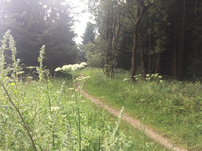 goodblog: Pilgern - Der Weg ist das Ziel