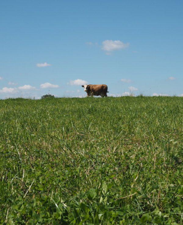 goodblog im Biomagazin: Man muss kein Aussteiger sein - Biobauer Hoina - Muh-Kuh