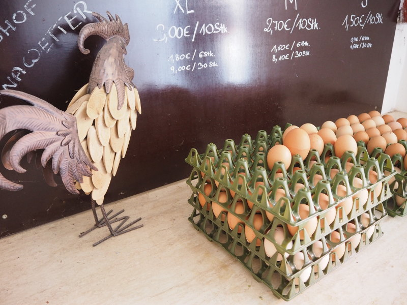 goodblog im Biomagazin: Man muss kein Aussteiger sein - Biobauer Hoina - Eier