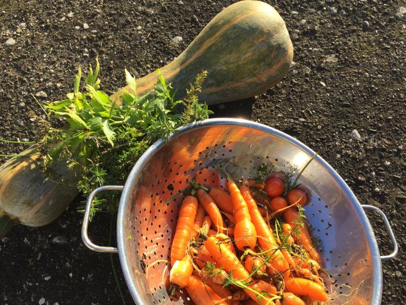 goodblog: Suppen-Gewürzpaste selbermachen - Ernte