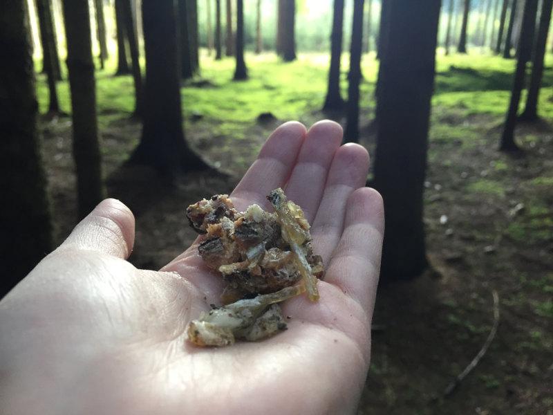 goodblog in der NEUEN: Wild werden - Pechsalbe selbermachen: Fichtenharz, Fichtenpech