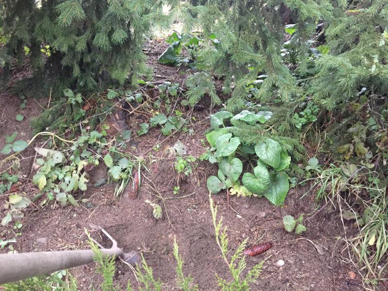 goodblog: Wipferlsirup vergraben - bloß wo?