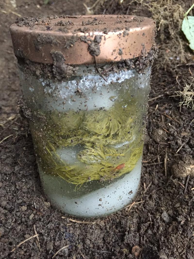 goodblog: Wipferlsirup vergraben - endlich gefunden