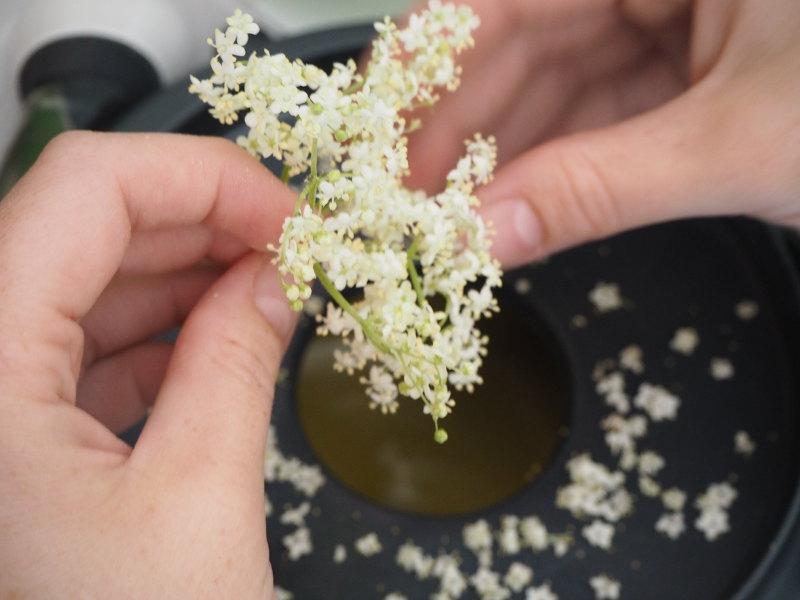 goodblog: Holunderblütencurd - Zubereitung
