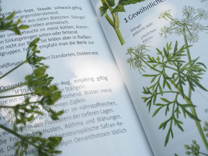 goodblog in der NEUEN Vorarlberger Tageszeitung: Sicher bestimmen - es könnte giftig sein!