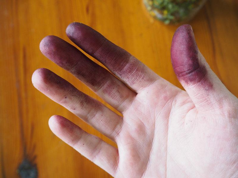 goodblog in der NEUEN Vorarlberger Tageszeitung: Rotöl ansetzen - Die Finger nach der Verarbeitung