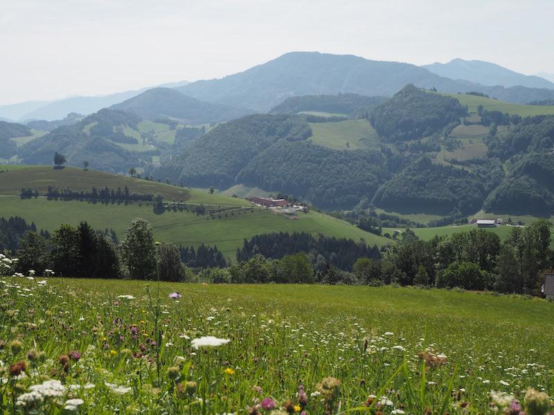 goodblog im Biomagazin: Schule am Biohof Losbichl