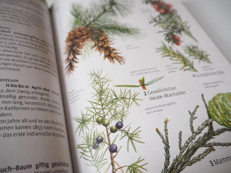 goodblog in der NEUEN Vorarlberger Tageszeitung: Wacholder bestimmen