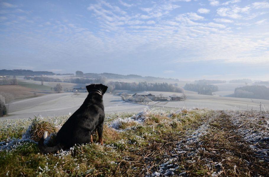 goodblog im Biomagazin: Jausenstation Hansberg und der Biohof Steinmayr