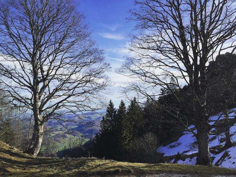 goodblog in der NEUEN Vorarlberger Tageszeitung: Schneerose - karge Winterbäume