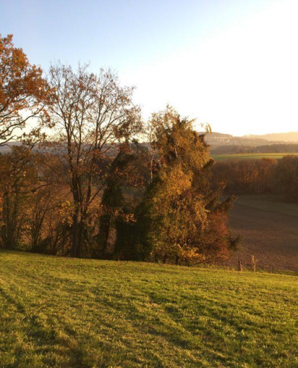goodblog und NEUE Vorarlberger Tageszeitung: Alte Sorten pflanzen