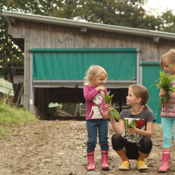 goodblog im Biomagazin: Schule am Biohof Losbichl (c) Burcusel/Huber